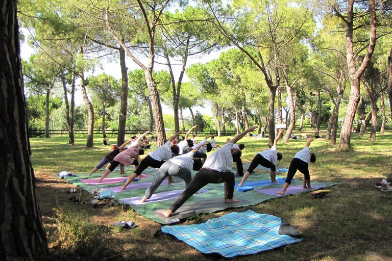Yoga under the pine trees